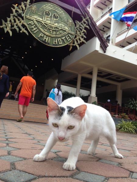 ピピ島で出会った猫の写真