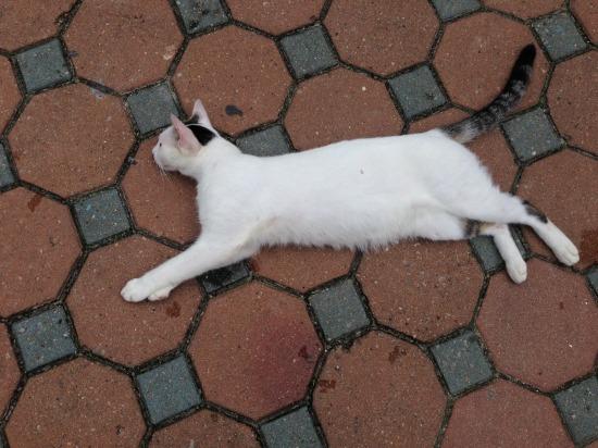 ピピ島の人馴れした猫の写真