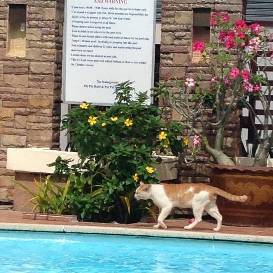 ホテルのプールサイドにいた猫の写真2