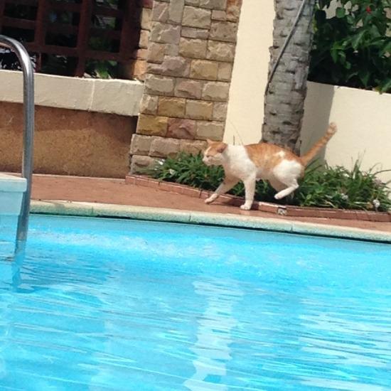 ホテルのプールサイドにいた猫の写真3