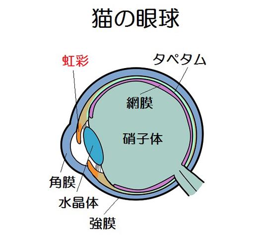 猫の目の構造