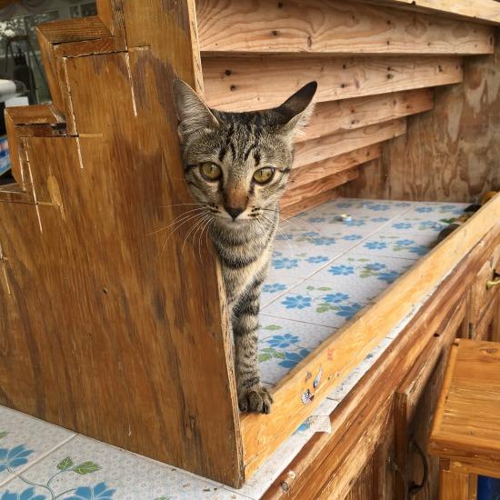 チャチュンサオで出会った猫の写真1