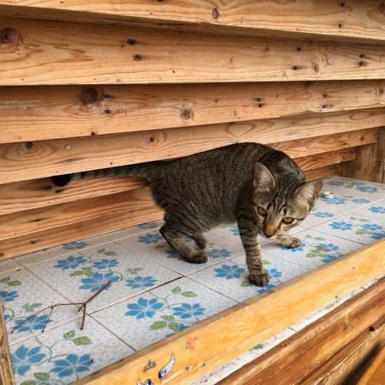 チャチュンサオで出会った猫の写真2