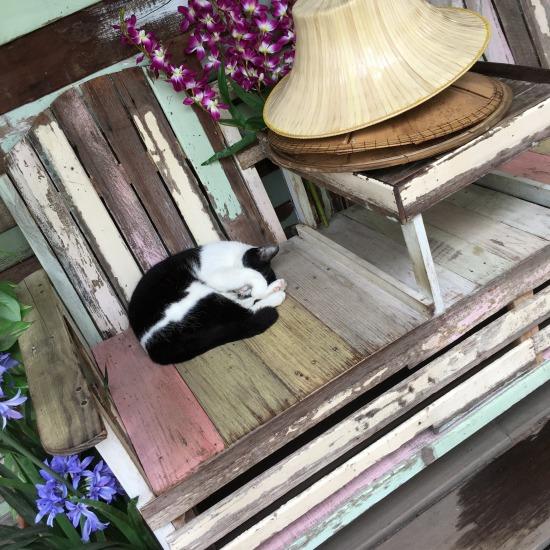 チャチュンサオで出会った猫の写真3