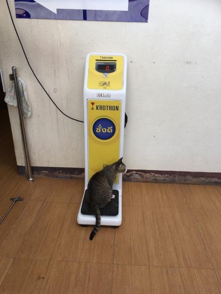 体重計にのる猫の写真1