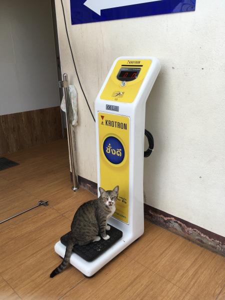 体重計にのる猫の写真2