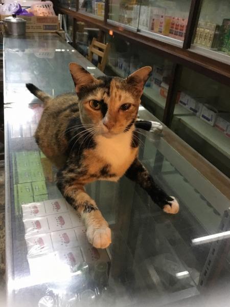 100年市場で出会った猫の写真1