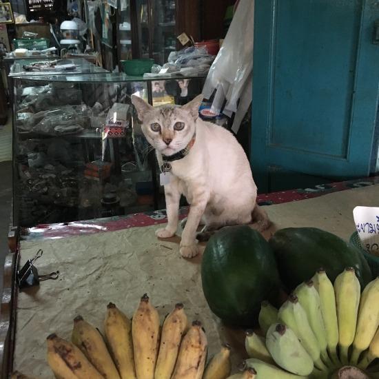 100年市場で出会った猫の写真3