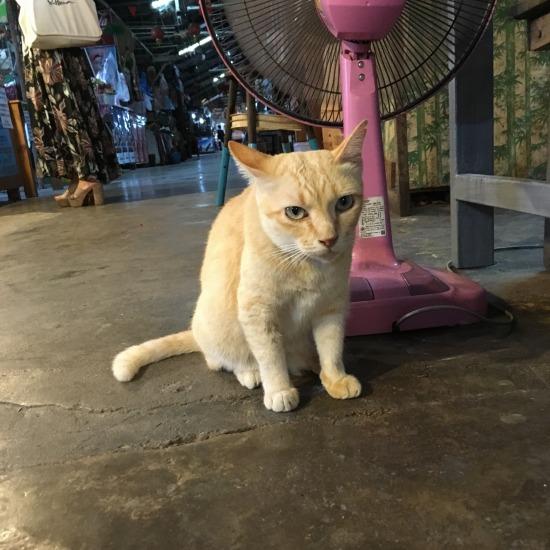 100年市場で出会った猫の写真4