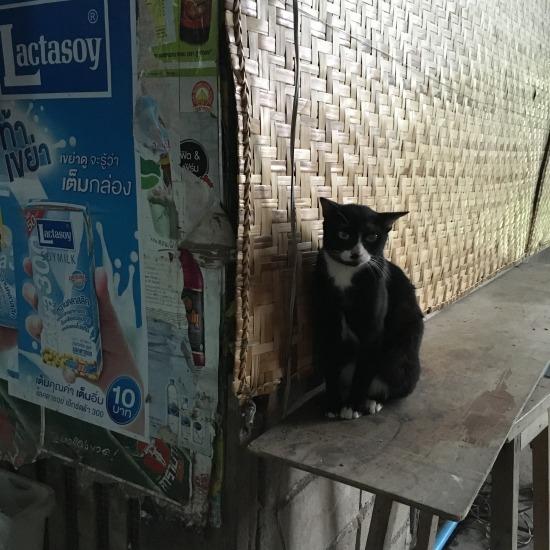 100年市場で出会った猫の写真6