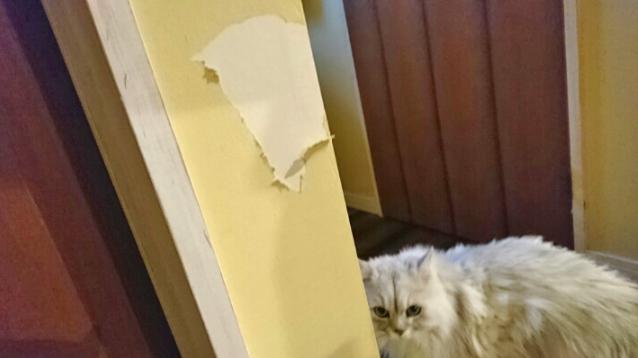 猫と壁の写真