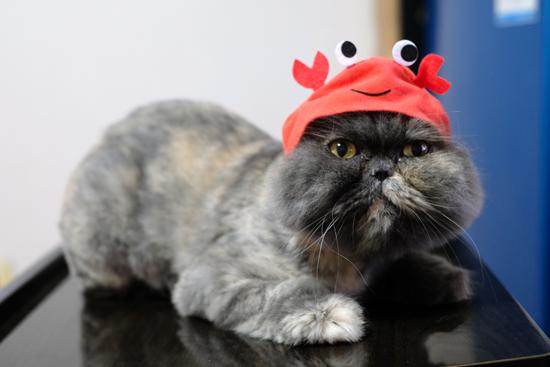 被り物をかぶった猫の写真2