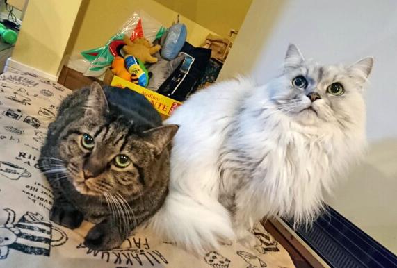 猫の先生とニセ蔵の写真