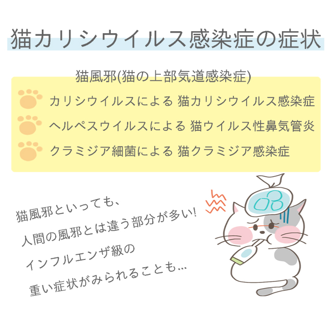 猫カリシウイルス感染症の症状イラスト