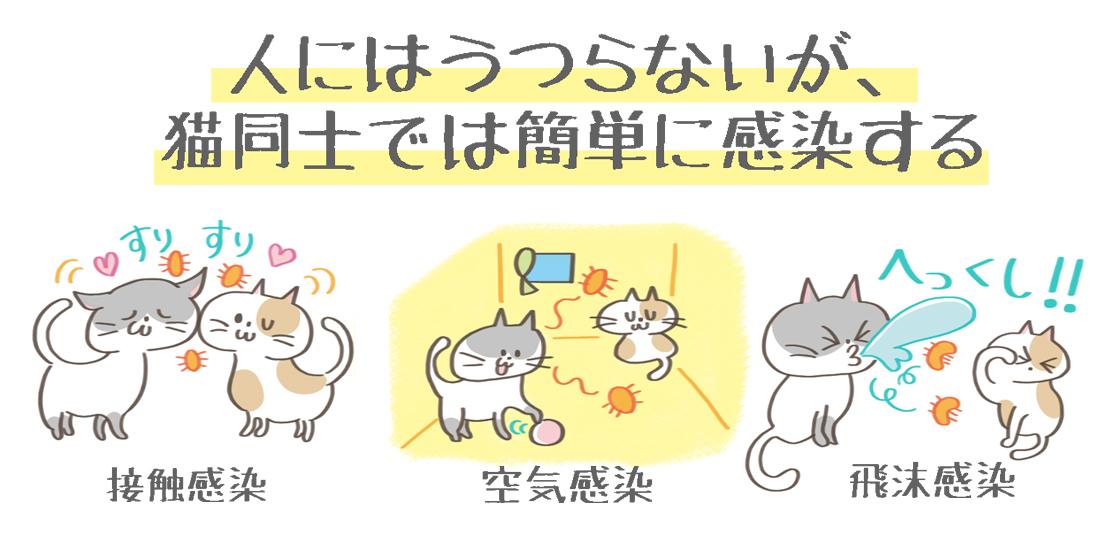 猫カリシウイルスの感染経路のイラスト