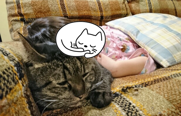 寝ている娘と猫の写真