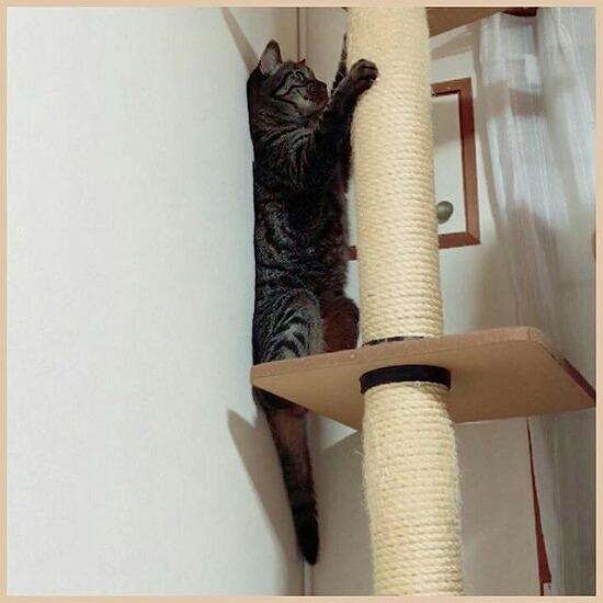 キャットタワーと猫の写真