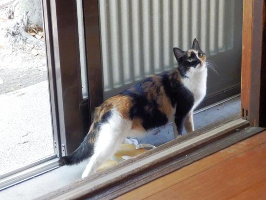野良猫の写真1