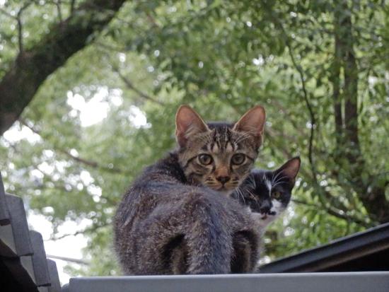 野良猫の写真2