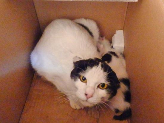 箱の中の猫の写真