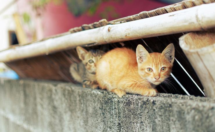 子猫 保護 野良猫