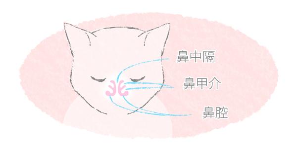 猫の鼻の構造をあらわしたイラスト