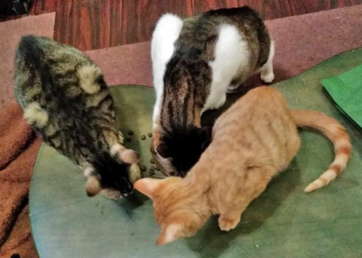 保護猫ハウスの猫達の写真2