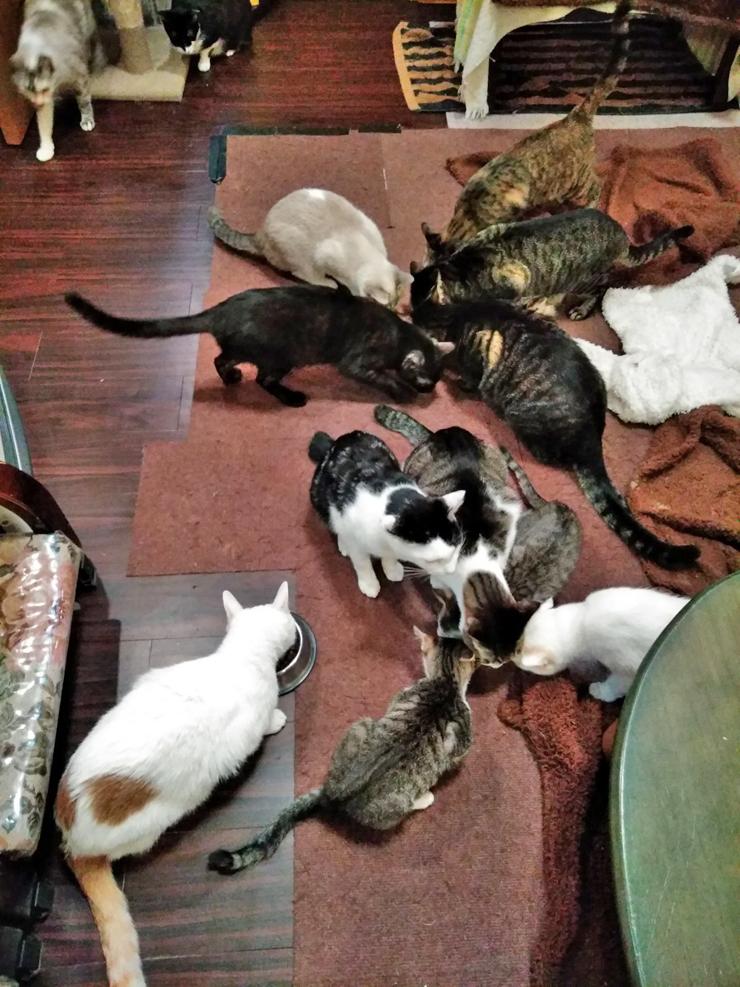 保護猫ハウスの猫達の写真4