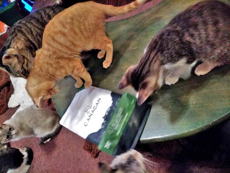 保護猫ハウスの猫達の写真5