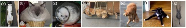 論文の猫写真2