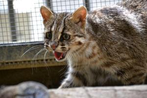 動物園ブログの写真2
