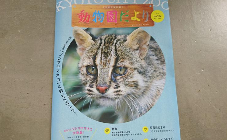 動物園のツシマヤマネコリーフレットの写真