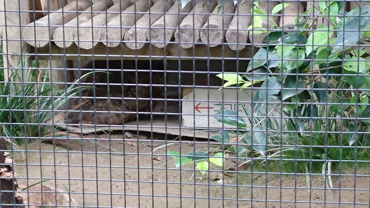 動物園のツシマヤマネコの檻の写真
