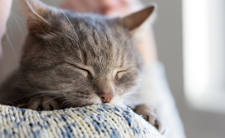保健所 猫 引き取り 条件