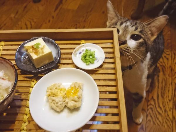 猫と宅飲みメニューと猫の写真