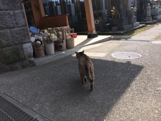 太宗寺にいた猫の後ろ姿の写真