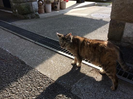 太宗寺にいたサビ猫の写真