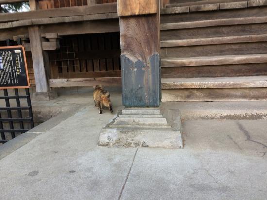 太宗寺の三日月不動堂にいたサビ猫の写真
