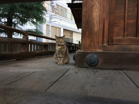 太宗寺の境内にいたサビ猫の写真