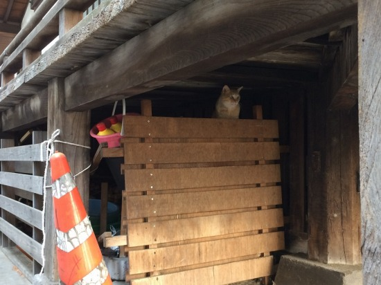 太宗寺の境内下にいた猫の写真