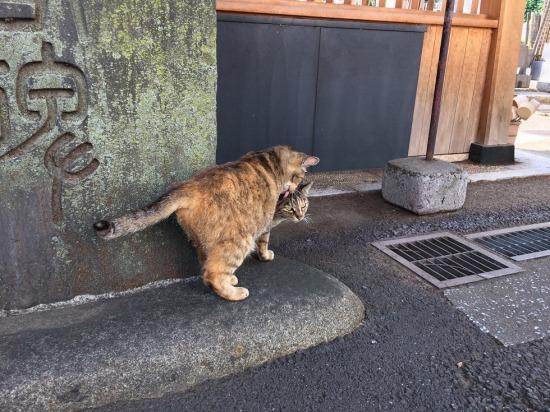 太宗寺の境内にいた2匹のサビ猫の写真