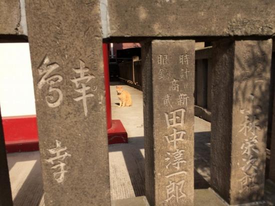 太宗寺の閻魔堂にいた猫の写真