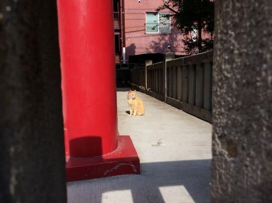 太宗寺の閻魔堂にいた茶トラ猫の写真