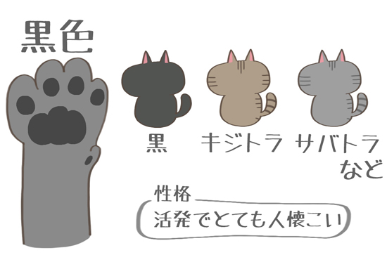 黒色の肉球の猫の特徴イラスト