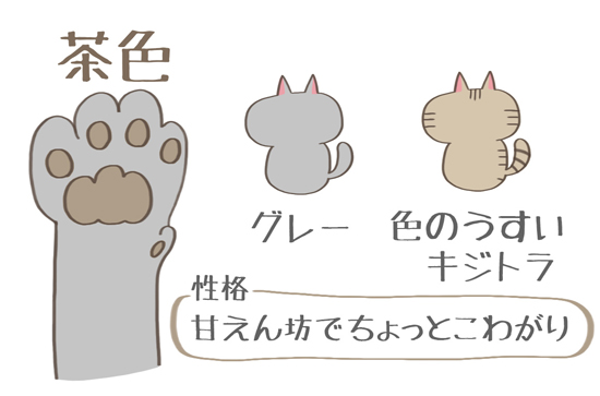 茶色の肉球の猫の特徴イラスト