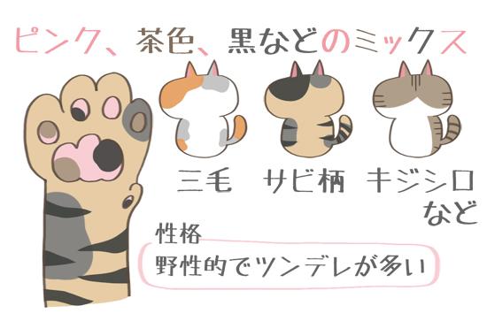 ピンク、茶色、黒などのミックス色の肉球の猫の特徴イラスト