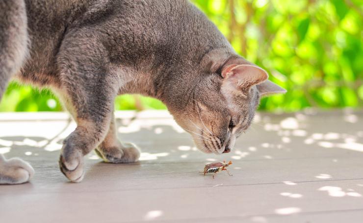 猫 団子 ホウ 酸 子供が容器を触っていた(なめてしまった)のですが、大丈夫?ペットが食べてしまったのですが、大丈夫?