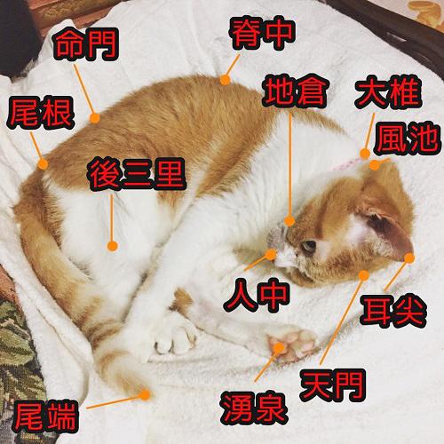 猫のツボの代表的な場所をあらわした写真