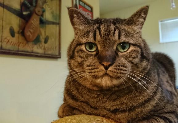 猫の写真4