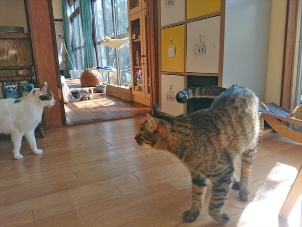 猫カフェめおまるけの和室スペースの写真1